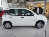 Fiat Panda bei Gebrauchtwagen.expert - Abbildung (6 / 13)