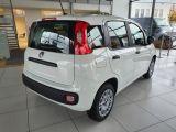 Fiat Panda bei Gebrauchtwagen.expert - Abbildung (5 / 13)