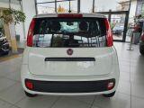 Fiat Panda bei Gebrauchtwagen.expert - Abbildung (4 / 13)